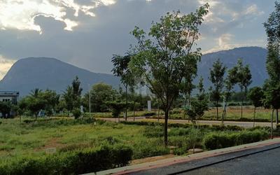 north-gardens-in-1359-1633000847237.
